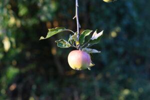 Apfelsaftaktion 2019